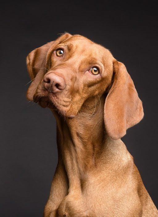 Soluciones caseras para una día de perros